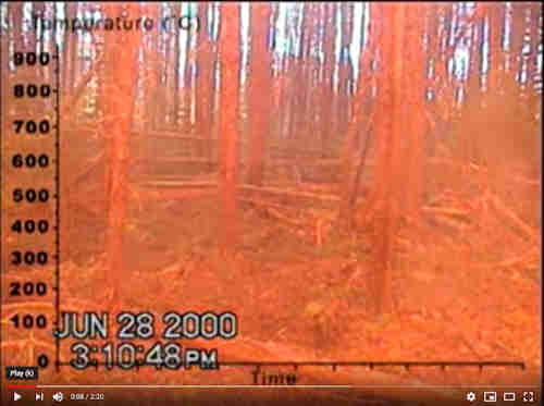 High-Intensity Forest Fire Video (2:20)